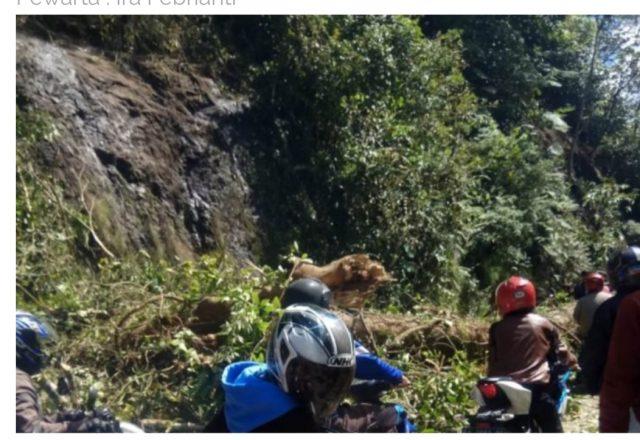 Breaking News, Longsor dan Pohon Tumbang, Silaing Macet
